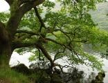 West Highland Way: en route from Rowardennan to Inverarnan. October 2015.