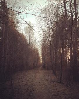 Pääsküla bog nature reserve. Tallinn, January 2017.