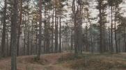 Pääsküla forest. Tallinn, January 2017.
