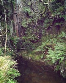 Ogwen Valley, Snowdonia National Park. Wales, September 2017.