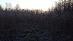 Frost on the wetlands. Tallinn 2016.