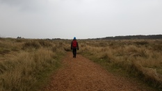 Holme Dunes National Nature Reserve, Norfolk.