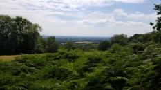 Kentish fernscape.