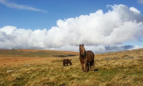 Dartmoor National Park. Devon, England. November 2017.