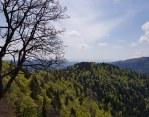 Schwarzwald, Germany. April 2018.