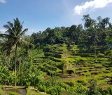 Tegallalang rice paddies, Bali. February 2019.