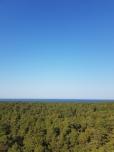 Laulasmaa. Estonia, September 2020.